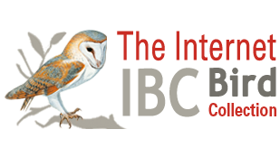 The Internet Bird Collection
